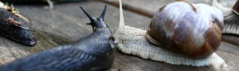 Limace & escargot