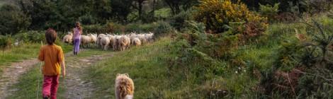 Sur la ferme Tir Eithin, partie 2